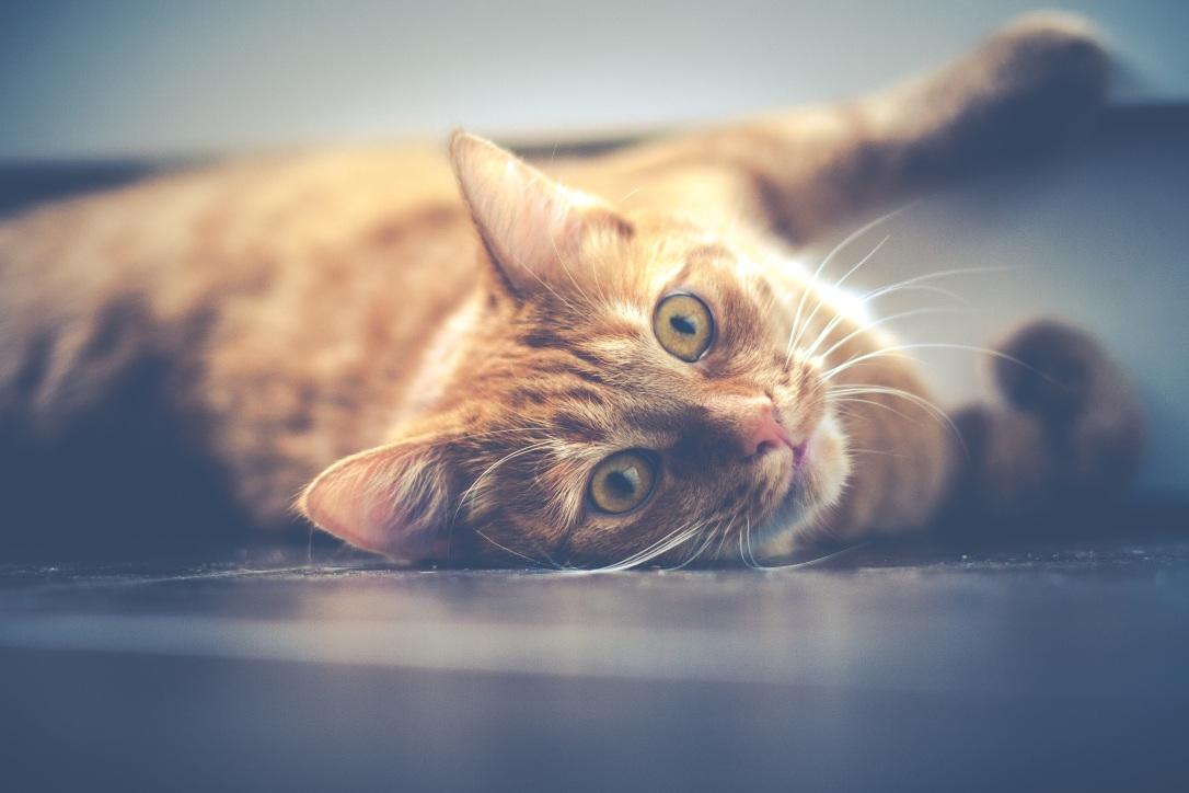 cat-1044914