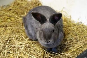 rabbit-1711287