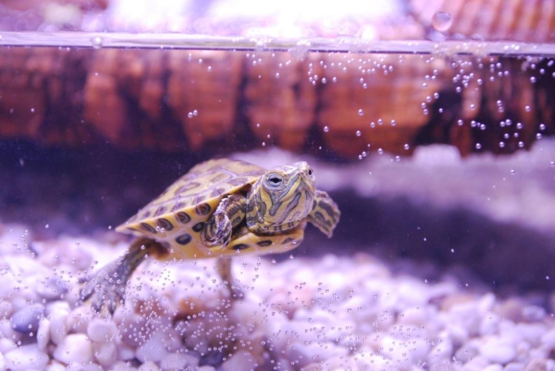 turtle-1137608